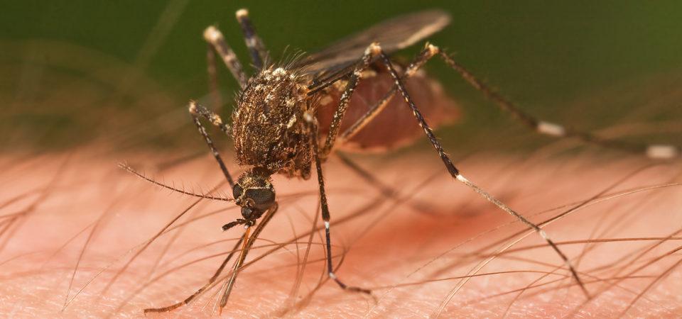 The Florida War on Zika