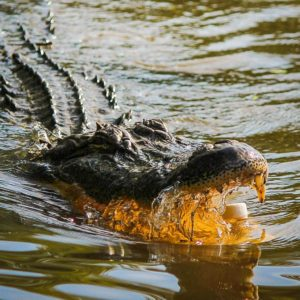 Florida Budget Tidbits Go From Alligators to Zoos