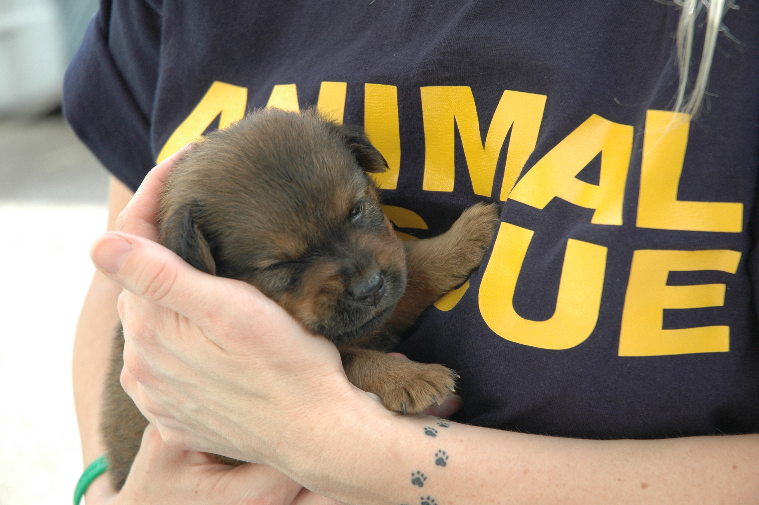 30  Beautiful Dog Rescue organizations