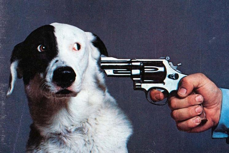 Animal Rescue Konsortium Is A True No Kill Animal Shelter ...