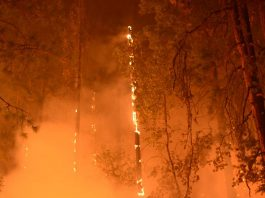 Deadly wildfire in Northern California