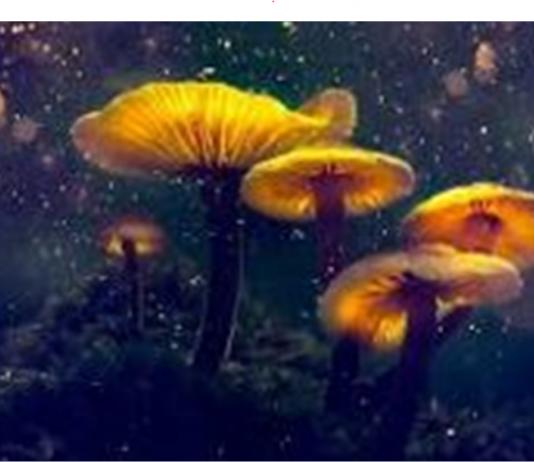 ATAI psychedelic drugs developer